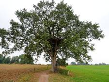 Wordt de Boomtuin van Diepenheim de Europese boom van dit jaar?