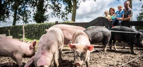 Vijf sterren voor diervriendelijke varkensboer in Zaamslag