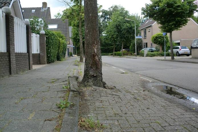 In de Bandeliersberg worden bomen vervangen door een kleiner aantal. De parkeerplaatsen worden hersteld. foto's frank timmers