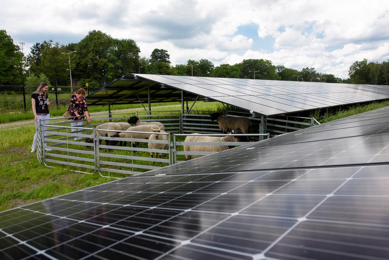 Het eerste zonneveld van Best van vijf hectare aan de Eindhovenseweg-Zuid werd in juni dit jaar geopend.