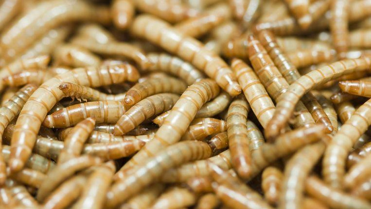 Meelwormen, Beeld Thinkstock