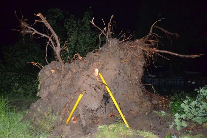De kluit van de boom trok de gele gasleiding kapot aan het Ot en Sienpad in Huissen.