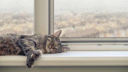 Dag start droog, na de middag opnieuw regen