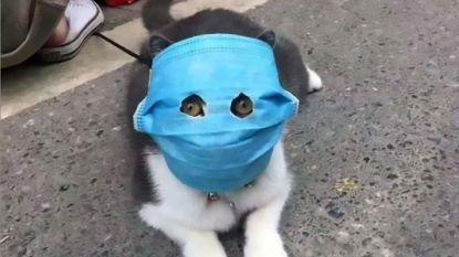 """""""Nee, u hoeft geen mondmaskers in te slaan"""" """"Ja, u mag nog op cruise"""" """"Nee, uw kat kan u niet besmetten"""""""