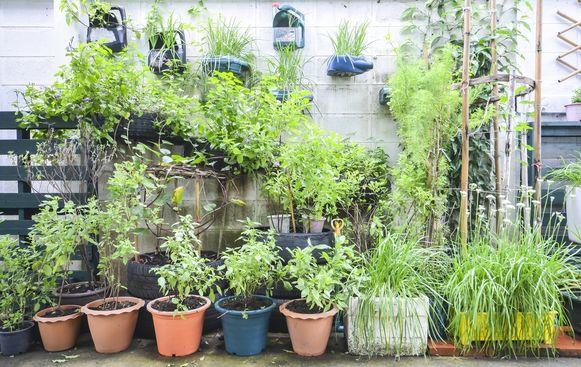 Door mee te wiegen met de wind worden de stengels van je kamerplanten krachtiger en hun bladeren dikker