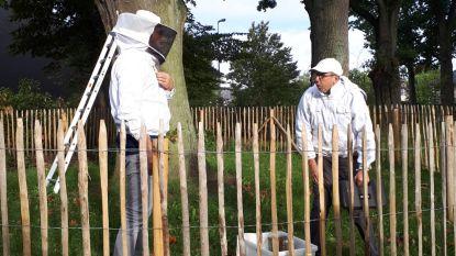 Bijenvolk in park van Beverlo stelt het goed