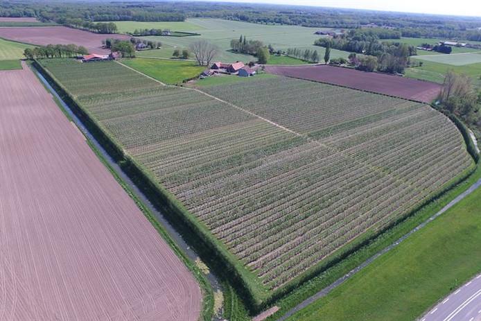 Een boer uit Olst heeft de resterende 4,5 hectare van het fruitteeltbedrijf gekocht.