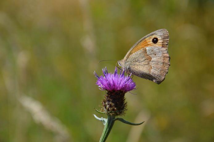 Een vlinder.