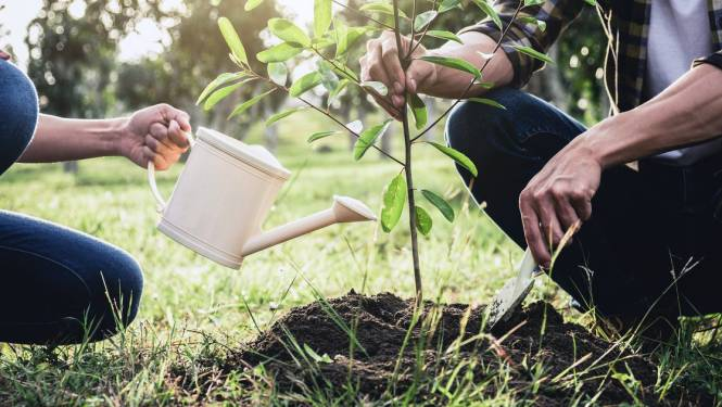 Glabbeek wil 20 hectare extra bos tegen 2030
