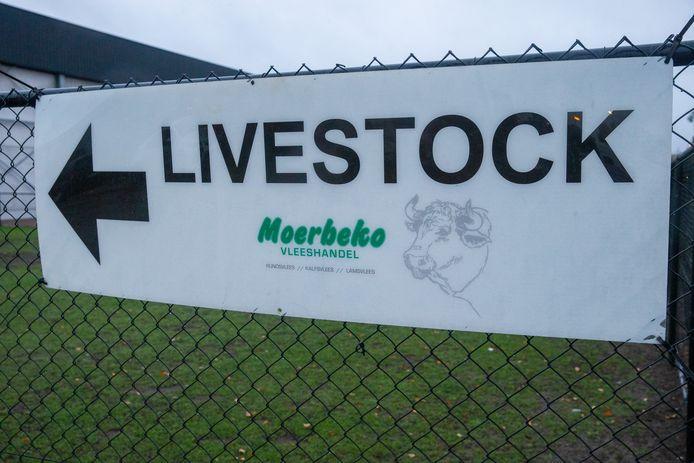 Slachthuis Moerbeko in Zele wil in gesprek gaan met Animal Rights.
