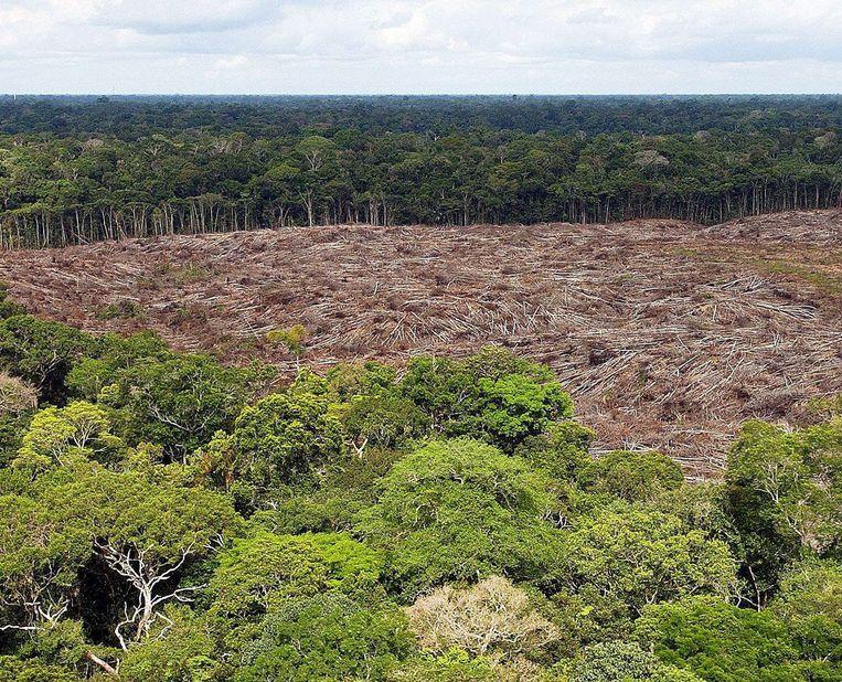 Ontbossing in de Amazone. Beeld EPA