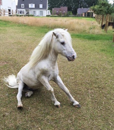 """Charlotte retrouve son poney mort dans la piscine: """"Il a reçu des coups"""""""
