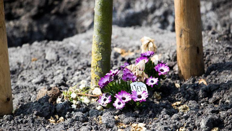 Een bloemetje bij één van de 298 bomen die op het Nationaal Monument MH17 zijn aangeplant. Beeld anp