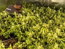 Politie ontdekt honderden hennepplantjes in Lekkerkerk