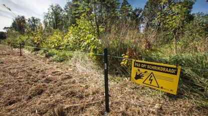 Twee kilometer schrikdraad geplaatst tegen everzwijnen