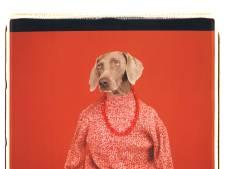 Hond mag mee naar het museum, maar het moet geen al te grote beestenboel worden