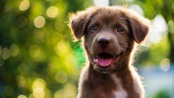 Menselijk 'puppygen' ontdekt: zachte gelaatstrekken moeten sociaal gedrag bevorderen