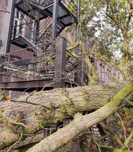 Oude kastanjeboom campus Ledeganck HOGENT buigt voor de wind