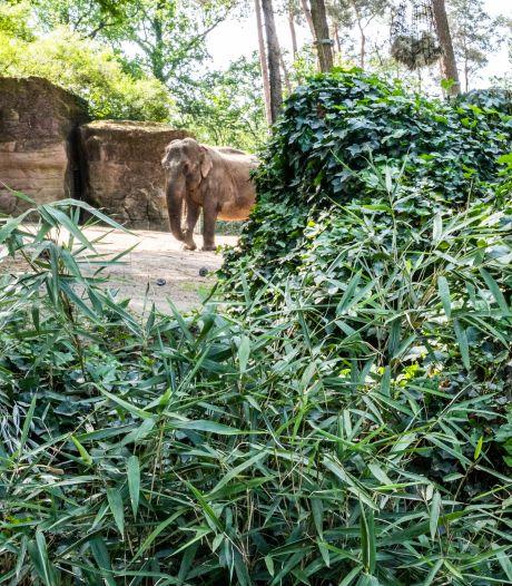 Anderhalvemeterregels bevallen goed in Burgers' Zoo: 'Zelfs de dieren keken op van de bezoekers'