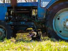 Steenrijke Britse boer doodgereden door eigen hond