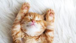 Uitgetest: de kat als therapeut