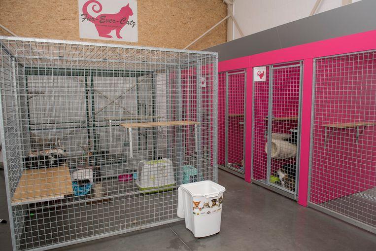 In het nieuwe asiel kunnen de katten afzonderlijk in hokken worden ondergebracht. Er is ook een gemeenschappelijke ruimte ter beschikking.