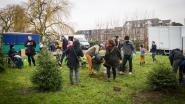 Nieuwe vorm van protest: kerstbomen planten