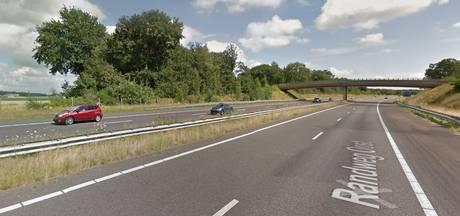 Dure wandeling: Pool loopt op A4 bij Halsteren en wordt door politie opgepikt