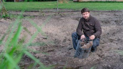 """Rattenvanger van Zoutleeuw Mark Reynders ziet populatie bruine ratten toenemen: """"Steden en gemeenten, grijp nu in"""""""