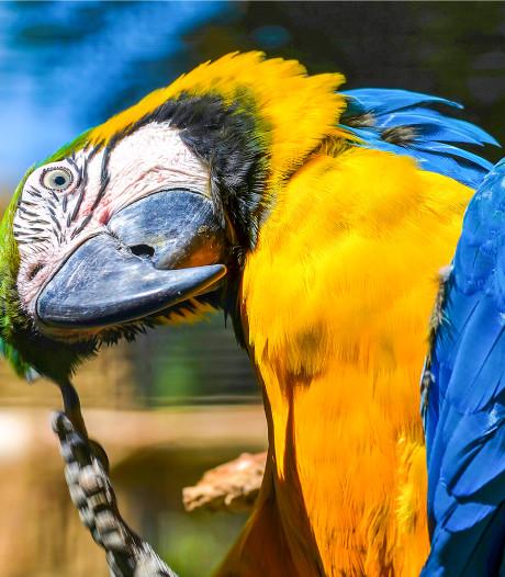 Ontsnapte papegaai scheldt brandweerman uit bij reddingsactie