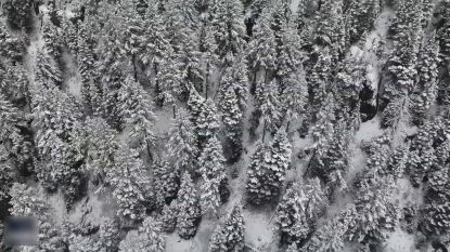 Prachtig: Amerikaans dennenbos gehuld onder laagje sneeuw