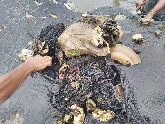 In de maag van het zeezoogdier zat een bonte verzameling kunststof voorwerpen.