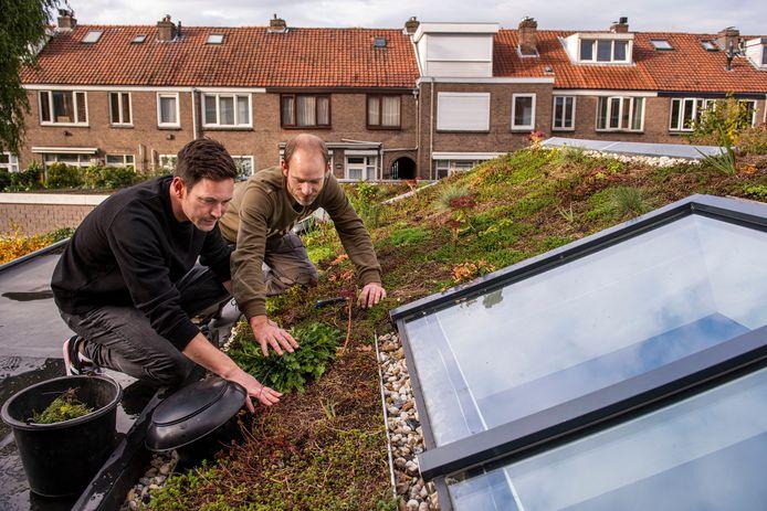 De regeling voor groene daken is erg in trek in Breda.