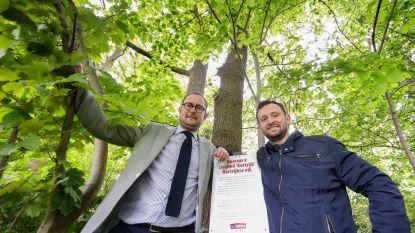 """Kortrijkse Eik erkend: """"Inwoners kunnen boom straks in eigen tuin planten"""""""