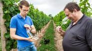 Limburgse wijn van vader en zoon nu ook in de supermarkt