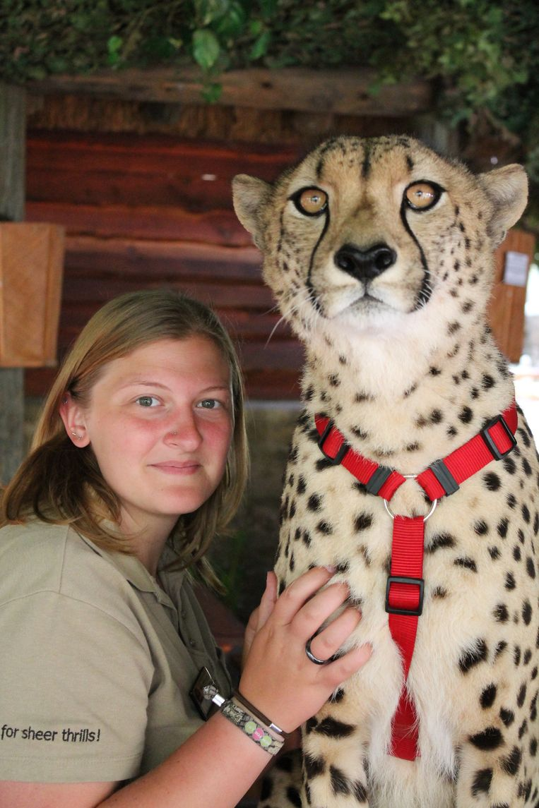 Jade bij haar favoriete grote kat: de jachtluipaard of cheeta.