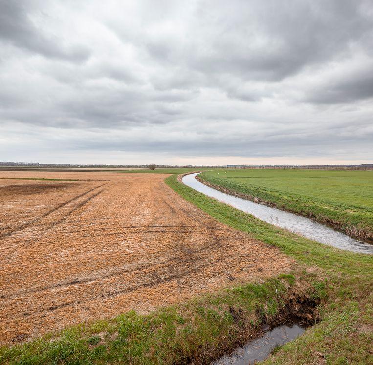 Met glyfosaat bespoten land (links) in Drenthe. Beeld Harry Cock