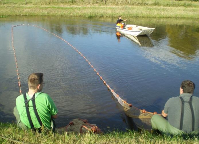 Om een gezonde populatie te behouden wordt een deel van de vissen uit de Jan van Galenvijver overgeplaatst naar de Grote Vijver in de Hertoglaan in Vught.