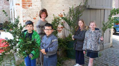 Buxuspalm afhalen in de pastorie