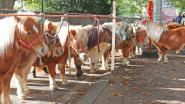 Pinksterweekend komt er aan: kermis en jaarmarkt in Brussegem