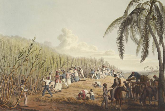 Tekening van slaven die aan het werk zijn op een plantage.