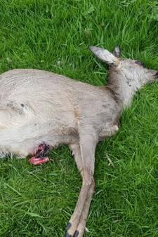 Hond bijt ree en twee ongeboren kalfjes dood