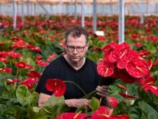 Coronacrisis na hagelschade bij Astense bloemenkweker Wijnen: 'Een heel slechte film'