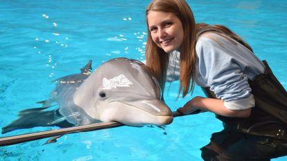 Boudewijn Seapark pakt uit met gloednieuwe dolfijnenshow die sensibiliseert