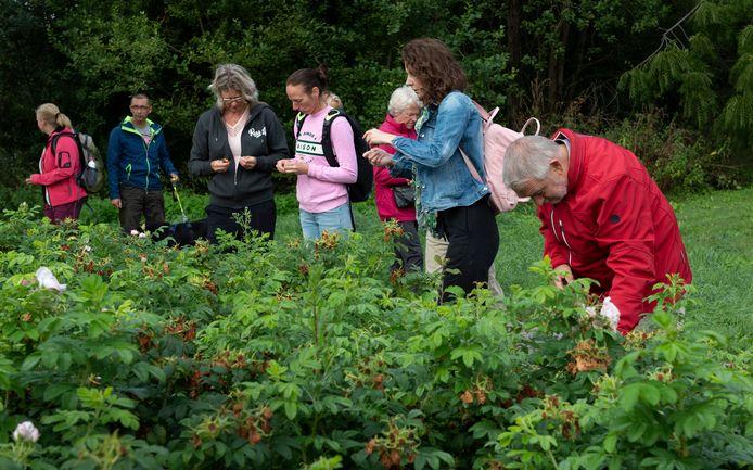 Renate Brouwer (tweede van rechts) vertelt tijdens de kruidenwandeling op Heerlijkheid Mariënwaerdt over welke planten en bloemen eetbaar zijn en wat je er al niet mee kunt.