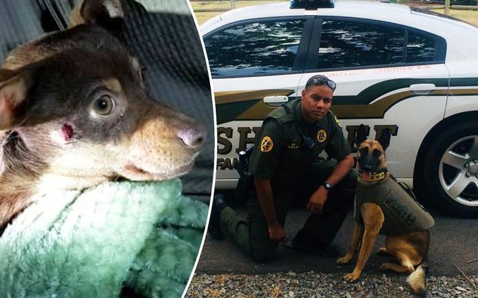 Deze agent schoot chihuahua Reese (links) neer. Die overleefde het, maar zijn kaak is wel verbrijzeld.