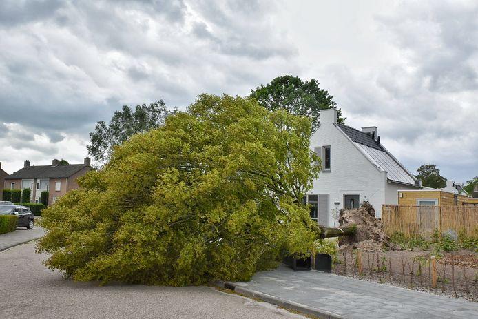 Boom om door storm in de Piet Heesterstraat in Haaren.