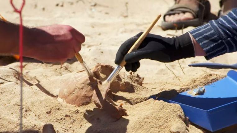 Enkele archeologen leggen een skelet bloot.