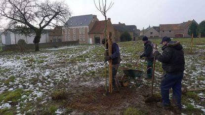Hoogstamboomgaarden beheren