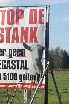 Alternatief plan voor 1.149 vleeskalveren aan Schoofbandweg in Rossum